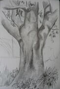 Moreton Bay Fig Tree II
